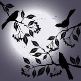 Birds on the branch during summers night. 2d vector vector illustration