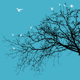 Birds on Branches Stock Image