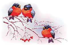 Birds on branches Stock Photography