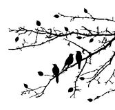 Birds on branches Stock Photos