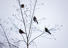 Birds on branches Stock Images