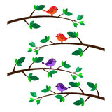 Birds on branches  Royalty Free Stock Photography