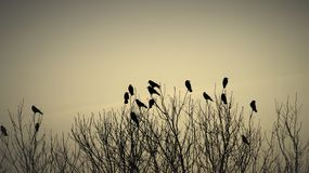 Birds on Branches. Just as the sun was setting the birds found a place to rest Stock Photography