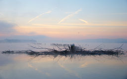 Birds, Branches In Morning On Lake Stock Photos