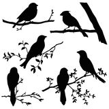 Birds on branches silhouette set. Isolated on white background vector design element royalty free illustration