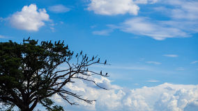 Birds on branches sky. Stock Image