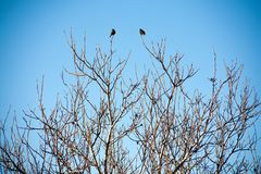 Birds on the branches of trees against the sky stock photos