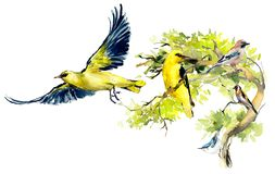 Birds background, frame. Decoration with wildlife scene. Hand drawn watercolor illustration royalty free stock photo