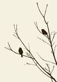 Birds on the branches Stock Images