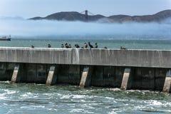 Birds on the breakwater in San Francisco Bay, California. Birds on the breakwater with the Golden Gate Bridge in background in San Francisco Bay, California Royalty Free Stock Photo