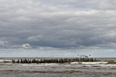 Birds on the breakwater. Royalty Free Stock Image