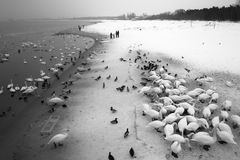 Birds on Brzezno beach Royalty Free Stock Image