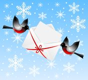 Birds bullfinchs carry an envelope with congratula Stock Image