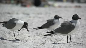 Birds on a Busy Beach (2 of 13). As the warm weather arrives people are drawn to sunny, sandy beaches. There they enjoy swimming, sunbathing, walking and bike stock video footage