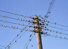 Birds on cables Royalty Free Stock Photo