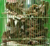 Birds in a cage Royalty Free Stock Photos