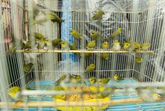 Birds in a cage Stock Photo