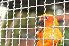 Birds in the cage await release. As freedom royalty free stock images