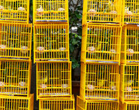 Birds in cage at birds market Stock Photography