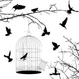Birds and cage silhouettes. Over white background Stock Photography