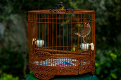 Birds in cages hanging at the Bird Garden - 7 Stock Image