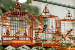 Birds in cages hanging at the Bird Garden - 4 Royalty Free Stock Image