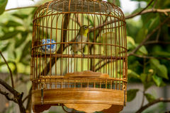 Birds in cages hanging at the Bird Garden - 9 Royalty Free Stock Photos