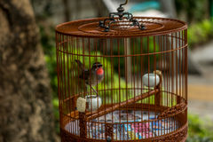 Birds in cages hanging at the Bird Garden - 6 Stock Photography