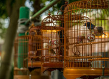 Birds in cages hanging at the Bird Garden - 5 Royalty Free Stock Photo