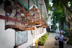 Birds in cages for sale in Hong Kong Royalty Free Stock Image