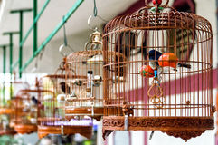 Birds in cages Royalty Free Stock Photo