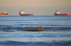 Birds flock and cargo ships raid royalty free stock photos