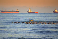 Birds and cargo ships raid Royalty Free Stock Photos