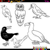 Birds cartoon coloring page Stock Photos