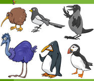 Birds cartoon set illustration Royalty Free Stock Photo