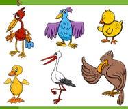 Birds cartoon set illustration Stock Photography
