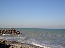 Birds in the caspian sea. Birds are flying over Caspian sea stock images