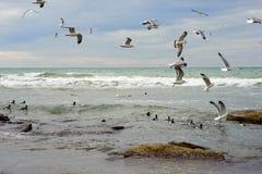 Birds of the Caspian sea. stock images