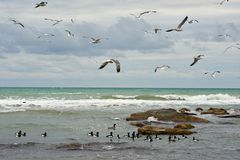 Birds of the Caspian sea. royalty free stock images