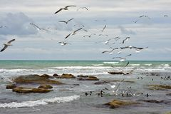 Birds of the Caspian sea. stock image