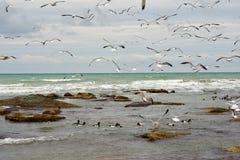 Birds of the Caspian sea. royalty free stock photos