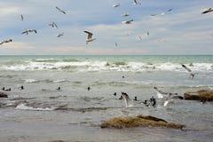 Birds of the Caspian sea. stock photography
