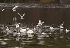 Birds catch the bread Stock Image