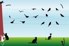 Birds and cats. Composition with birds and cats who want to hunt for birds Royalty Free Stock Photos
