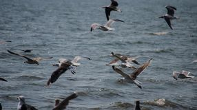 Birds on Chesapeake bay royalty free stock images