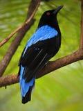 Birds in Chester. ZOO...United Kingdom stock image