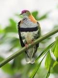 Birds in Chester. ZOO...United Kingdom stock photo