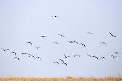 Birds - Chobe N.P. Botswana, Africa Stock Image