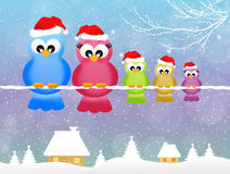 Birds at Christmas Stock Photos