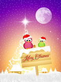 Birds at Christmas Royalty Free Stock Photography